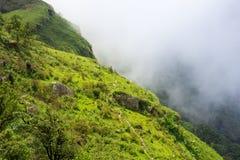 Manera del paseo en el top verde del bosque de la pista de senderismo de la montaña en thaila Imagen de archivo