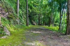 Manera del paseo a la naturaleza Foto de archivo libre de regalías