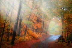 Manera del paseo a través de rayos del sol de la madrugada fotos de archivo
