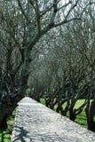 Manera del túnel del árbol Foto de archivo libre de regalías