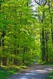 Manera en bosque Foto de archivo