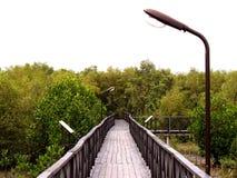 Manera en el bosque 03 Imagen de archivo