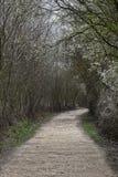 Manera en el bosque Foto de archivo libre de regalías