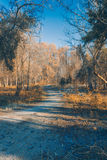 Manera en el parque viejo Fotos de archivo