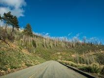 Manera en la montaña del bosque del Estado de la secoya Imagen de archivo