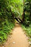 Manera en selva Imagen de archivo