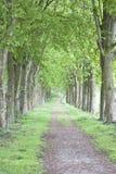 Manera en una madera verde Fotos de archivo