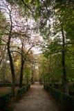 Manera entre los árboles del otoño Foto de archivo libre de regalías