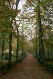 Manera entre los árboles del otoño Imagen de archivo libre de regalías