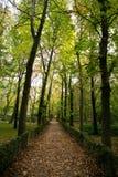 Manera entre los árboles del otoño Fotografía de archivo