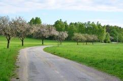 Manera floreciente de la primavera Imagen de archivo libre de regalías