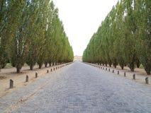 Manera hermosa de la caminata con el camino del árbol y de la piedra Foto de archivo