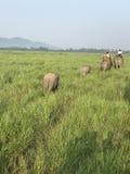 Manera natural con los elefantes fotografía de archivo libre de regalías