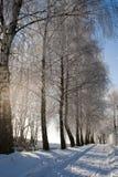 Manera Nevado y escarcha escarchada en los árboles Fotografía de archivo libre de regalías