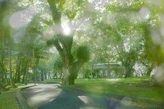 Manera que activa en jardín y rayo de sol hermoso fotos de archivo
