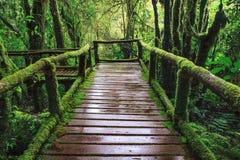 Manera que camina del birdge de madera mojado del rastro en el árbol de hoja perenne f de la montaña de la colina Fotografía de archivo