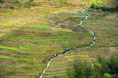 Manera a través de las terrazas del arroz en Longsheng, China Foto de archivo