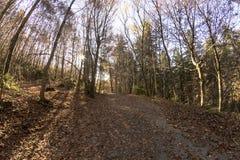 Manera a través del bosque otoñal agradable Fotografía de archivo libre de regalías