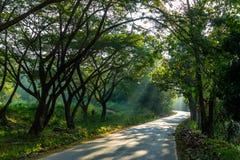 Manera verde Imagen de archivo