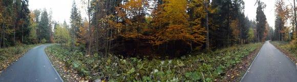 Manera y el bosque Foto de archivo