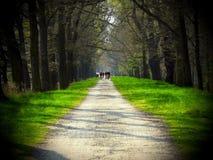 Manera y en los ciclistas de la distancia Imagen de archivo