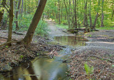 Manera y poco puente en bosque de la primavera en poco Carpatian Imagen de archivo libre de regalías