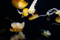 Manet i akvarium Royaltyfri Foto
