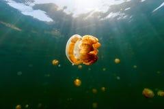 Manet sjö Royaltyfri Fotografi