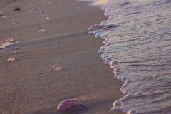 Manet som sköljas upp på stranden av röd sea-2 Arkivfoto