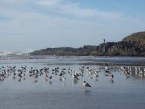 Manfiske på den steniga kusten Royaltyfria Foton