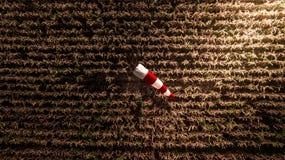 Manga de viento aérea de la visión superior en la estación de la cosecha de la granja del maíz foto de archivo libre de regalías