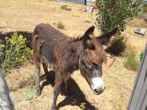 Manga donkey Stock Photos
