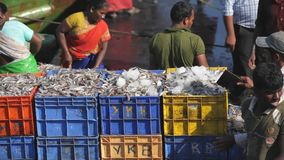 MANGALORE, INDIA -2011: Fishermen transferring fish catch from sea to trucks on October stock video