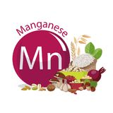 Manganese. Food sources. Products with the maximum content of microelements. Stock Photo
