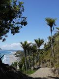 Mangawhai cliff walk: nikau trees coast view Royalty Free Stock Image