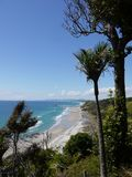 Mangawhai cliff walk: nikau trees coast view Royalty Free Stock Photos
