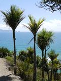Mangawhai cliff walk: nikau trees sea view Royalty Free Stock Photos