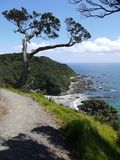 Mangawhai cliff walk: rocky coast view Stock Image