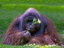 Mangez la fleur Images libres de droits