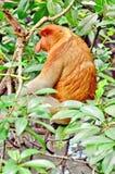 Manggrove Tarakan miasto Zdjęcie Royalty Free