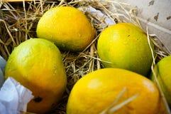 Manghi di Alphonso imballati in paglia India Immagini Stock Libere da Diritti
