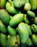 Manghi verdi di recente selezionati I manghi sono frutti tropicali ben noti ed a volte sono utilizzati nella cottura Fotografie Stock Libere da Diritti