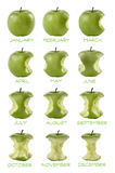 Mangiate del mele de Sequenza di dodici Fotos de archivo libres de regalías