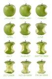 Mangiate del mele di Sequenza di dodici Fotografie Stock Libere da Diritti