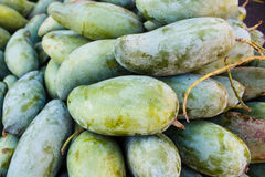 Mangifera indica, fresh mangos. Royalty Free Stock Image