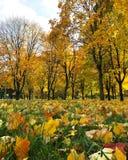 Mangificent höst i Vitryssland arkivbilder