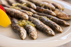 Mangime per pesci Immagine Stock