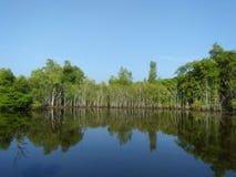 Mangle hermoso del phototo natural de Sri Lanka Imagenes de archivo