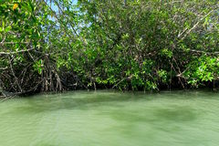Mangles en el mar en el parque nacional del ROI Yot de Khao Sam Foto de archivo libre de regalías