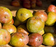 Mango Fotografie Stock Libere da Diritti
